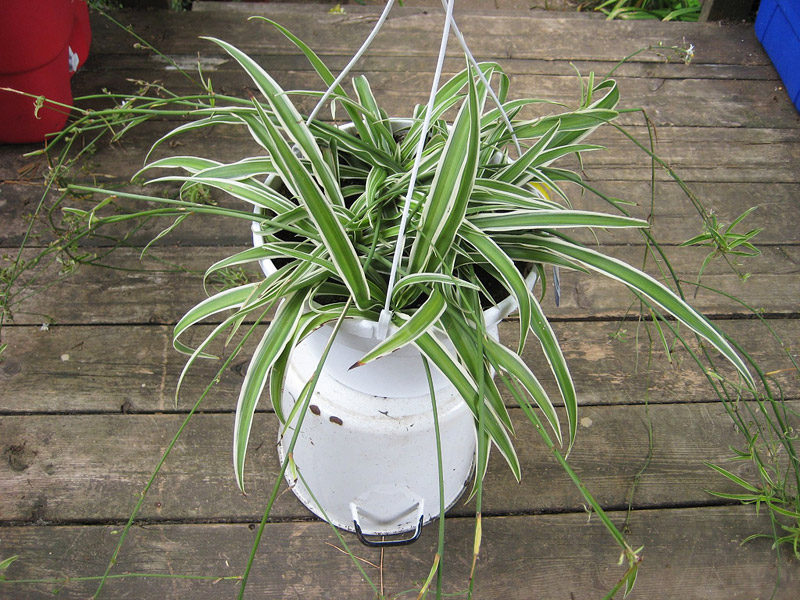 Improve Indoor Air Quality With Air Purifying Houseplants