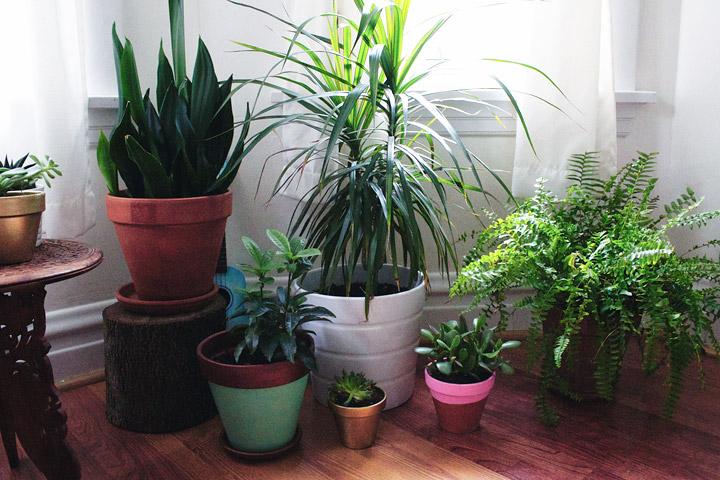 Bringing Plants Indoors