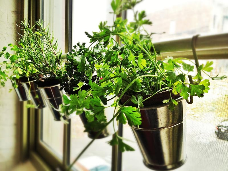 Best Herbs To Grow Indoors