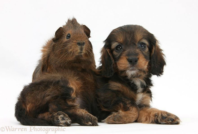 Cuteness Alert! - Cute Portraits of Animal Doppelgangers