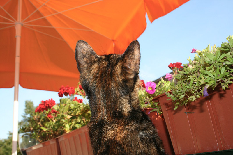 5 Common Cat Behavior Myths Debunked