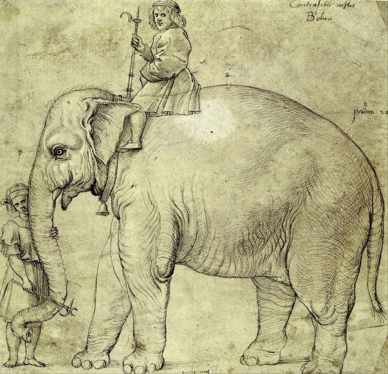 Why is an Elephant Buried Under the Vatican?