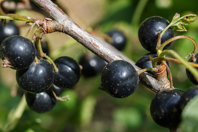 What are Antioxidants and How They Benefit Your Health?
