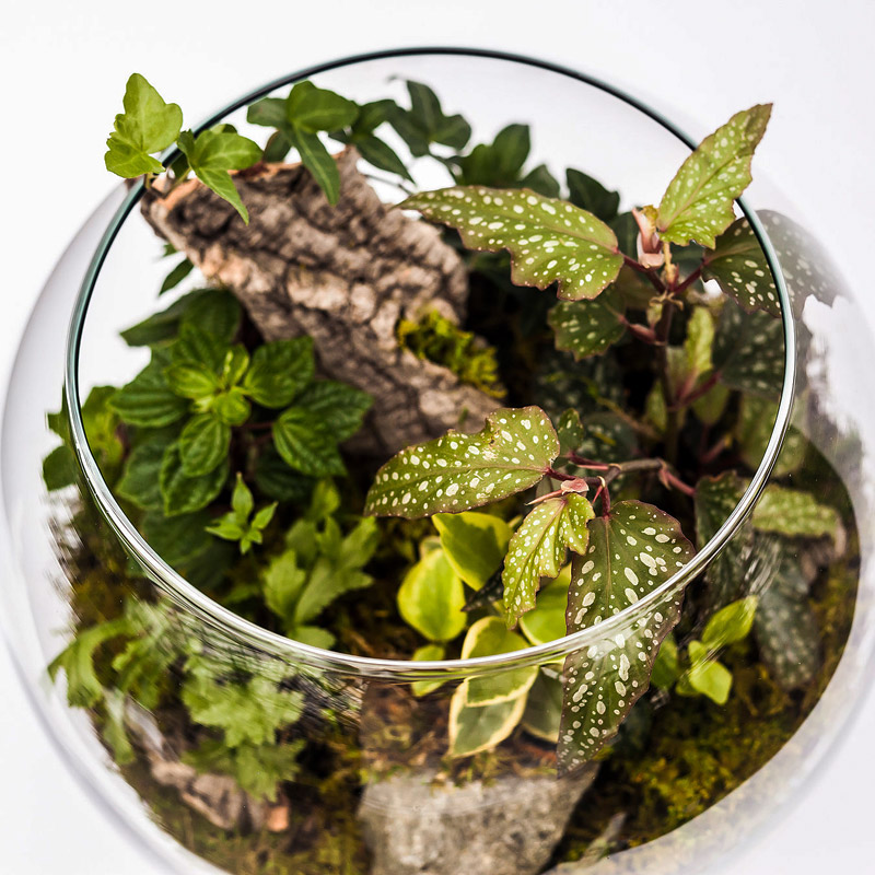 Choosing the Best Plants for Your Terrarium
