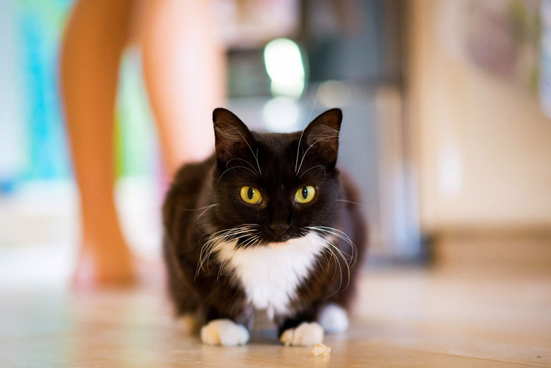 Making Homemade Cat Food: Recipes, Benefits and More