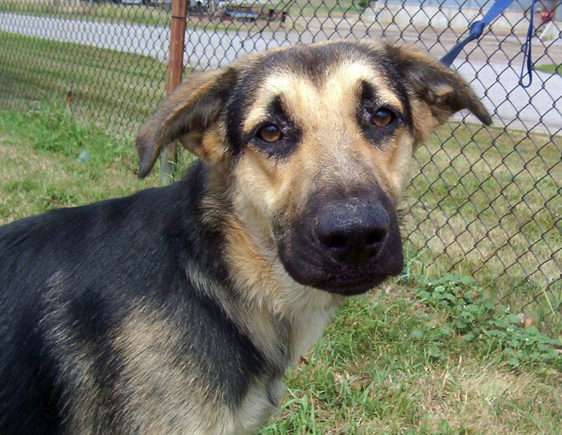 Adopting a Shelter Dog? 6 Things to Consider