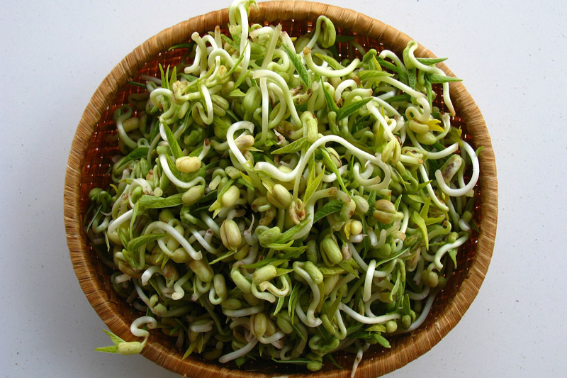 Healthy Diet - Why You Should Eat Sprouts