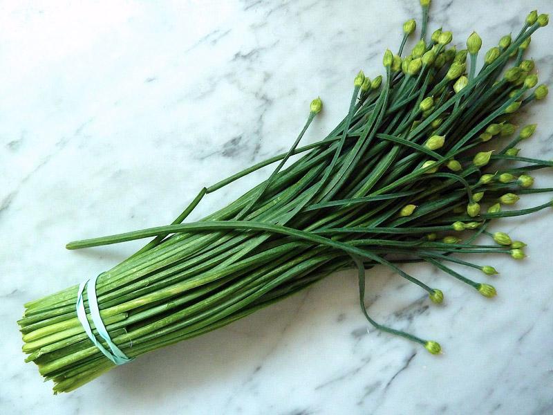 Gardening Guide to Fresh Herbs Year-Round
