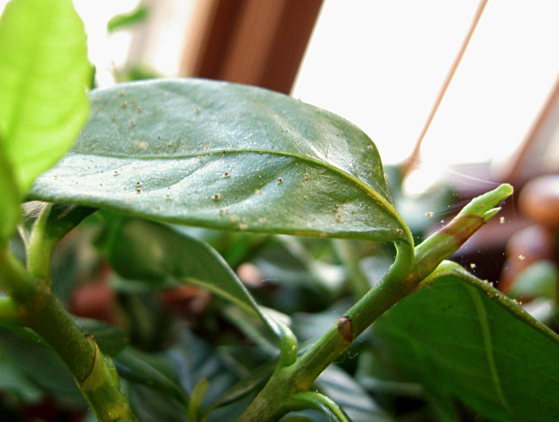 Steps for Bringing Plants Indoors for Winter