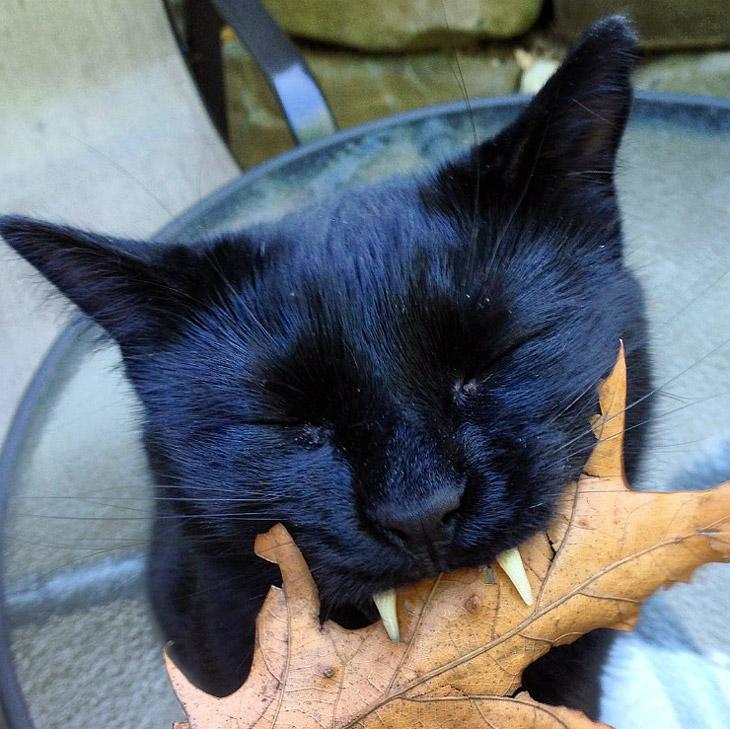 Vampire Cat Monk is Social Media Star
