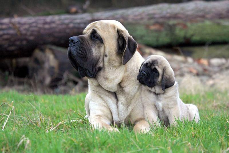 The World's 10 Hardest Dog Breeds to Train