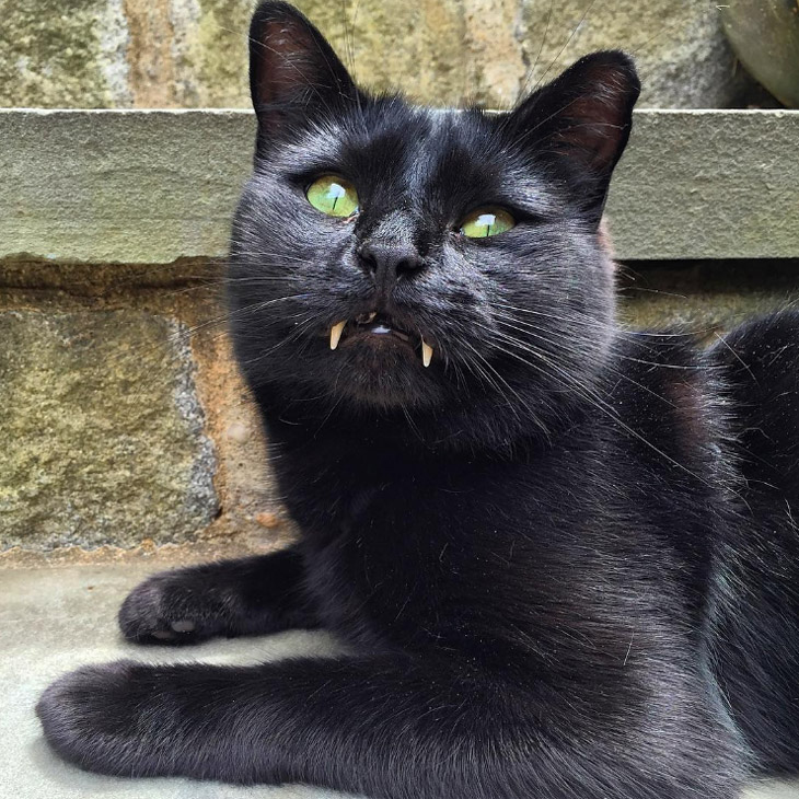 Vampire Cat Monk is Social Media Star