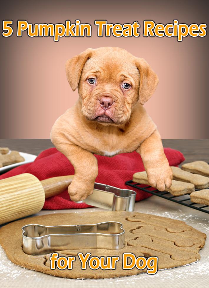 5 Pumpkin Treat Recipes for Your Dog - Quiet Corner