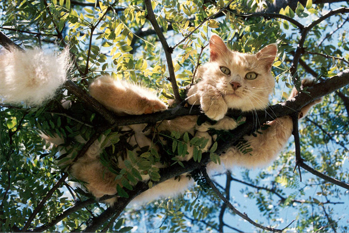Quiet Corner How To Get A Cat Down From A Tree Quiet Corner