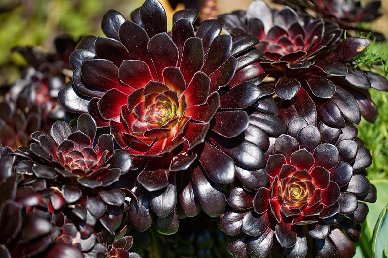 Mix and Match These 10 Outstanding Succulents
