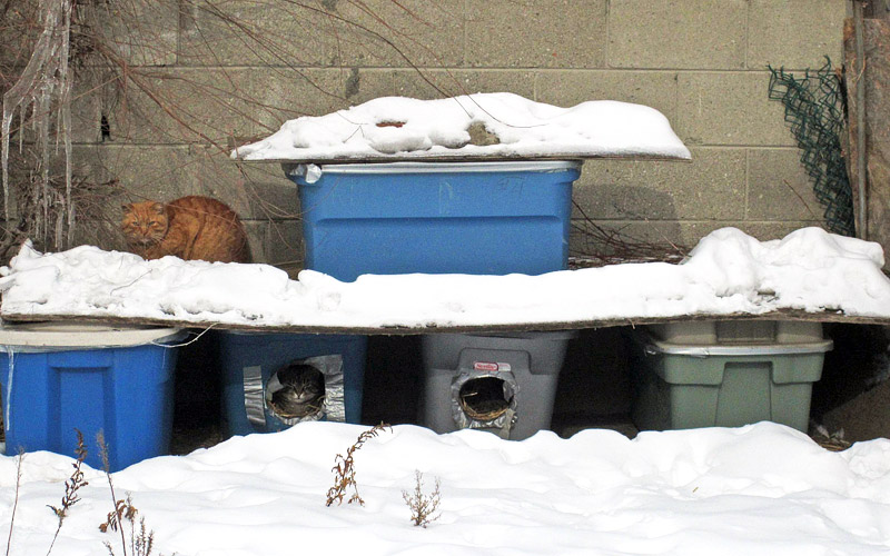 How to Help Homeless Cats in the Winter