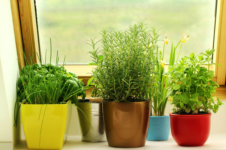 How to grow herbs indoors this winter