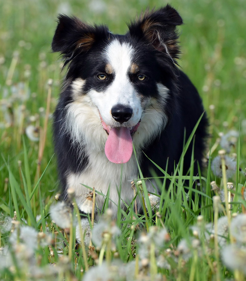 Top 4 Commonly Misunderstood Dog Breeds