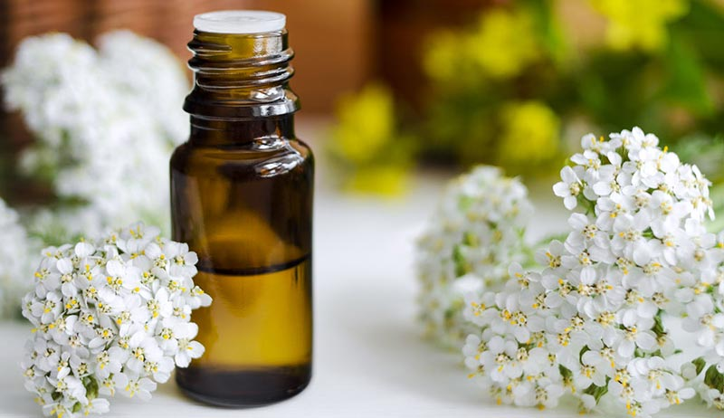 Yarrow Uses for Natural Healing