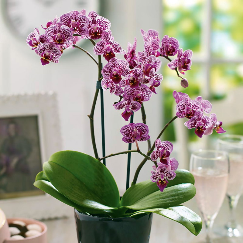 Top 3 Ideal Plants for City Living