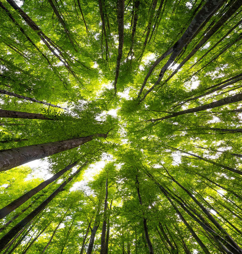 You Need To Try Japanese Forest Bathing
