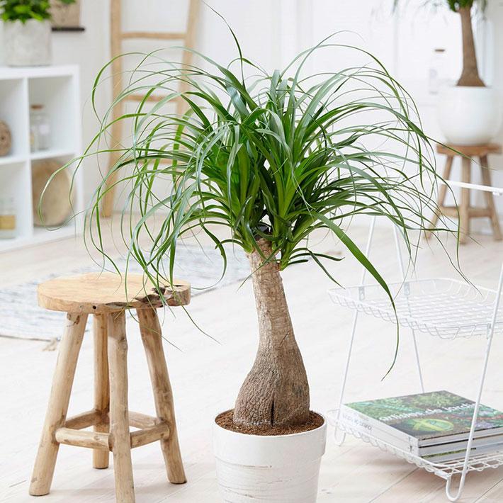 20 Easiest Houseplants You Can Grow