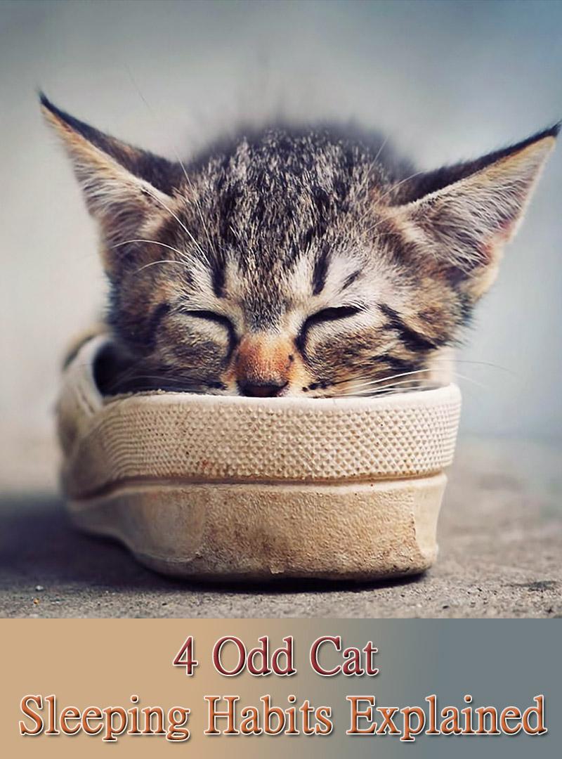 4 Odd Cat Sleeping Habits Explained