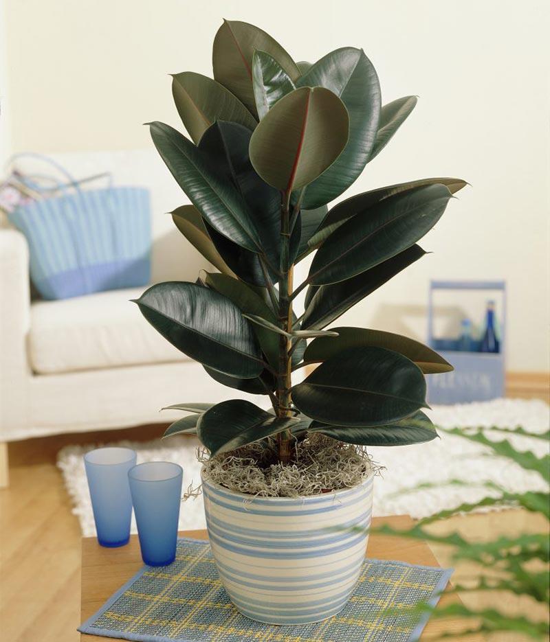 Easiest Houseplants You Can Grow