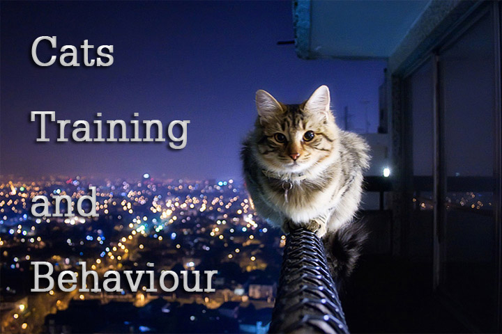 Cats Training and Behaviour