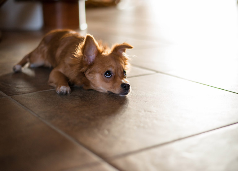 Best flooring for dogs quiet corner for Hardwood floors good for dogs