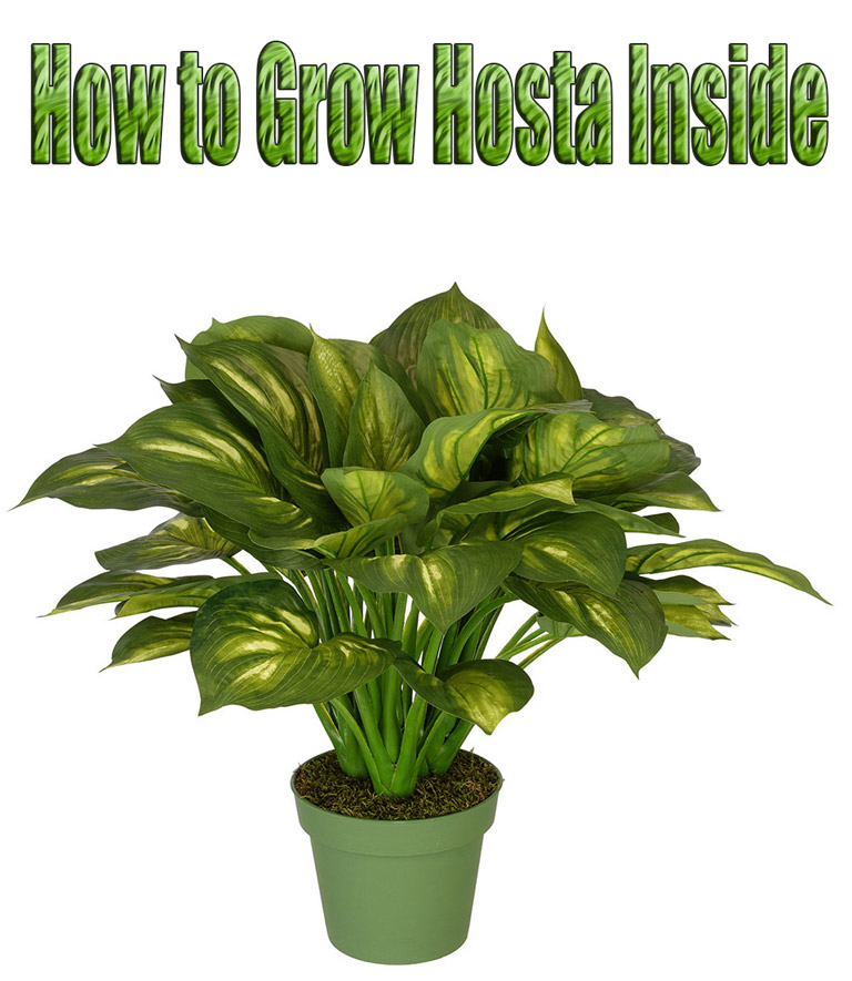 Quiet Corner Container Gardening Ideas: Quiet Corner:How To Grow Hosta In Containers