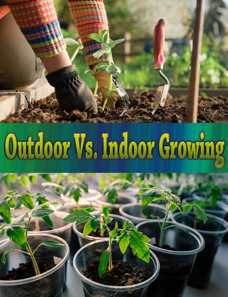 outdoor vs indoor growing quiet corner. Black Bedroom Furniture Sets. Home Design Ideas