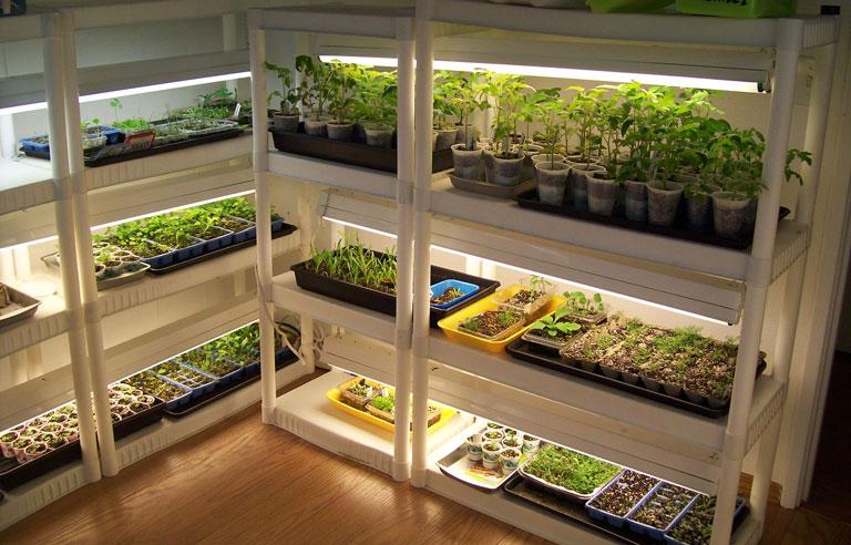 Outdoor Vs. Indoor Growing