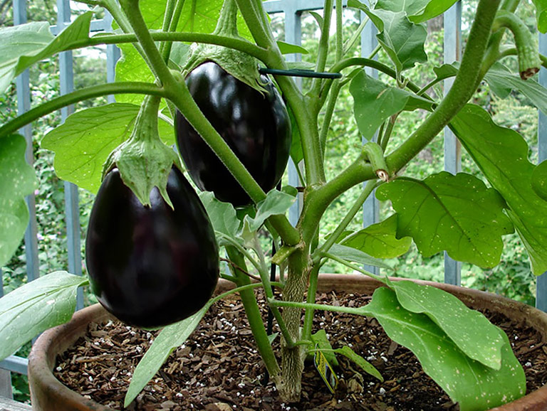 Container Gardening - 8 Easy to Grow Veggies