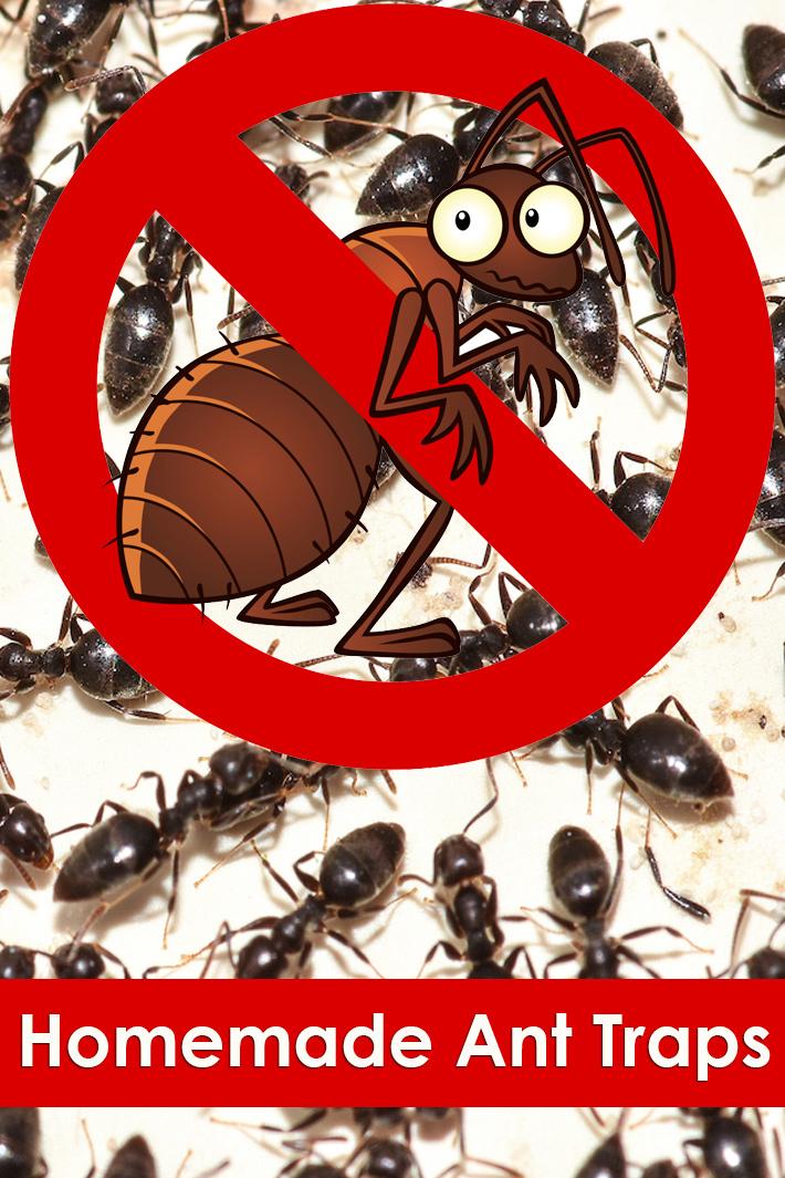 Homemade Ant Traps - Quiet Corner