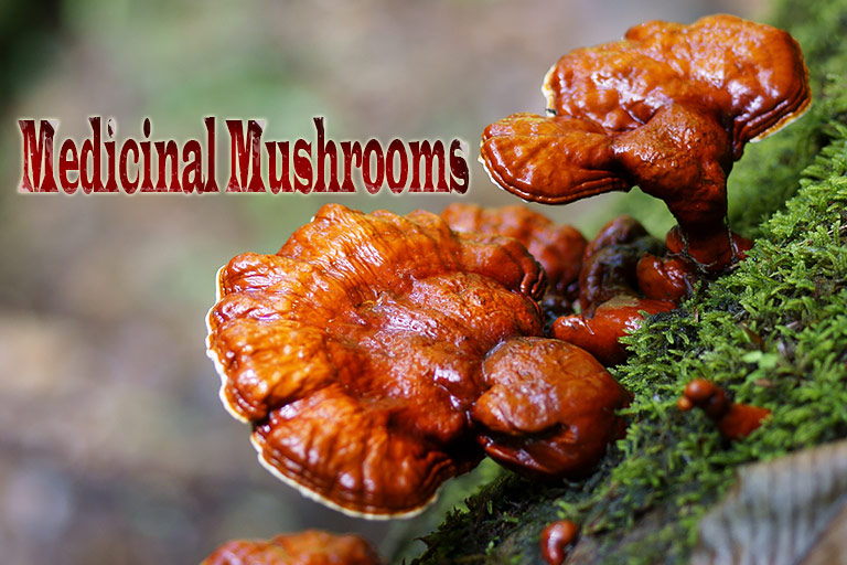 5 Medicinal Mushrooms With Powerful Health Benefits