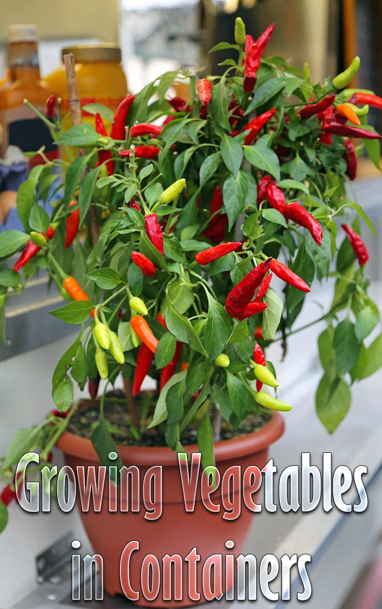 Container Gardening - 8 Easy to Grow Veggies