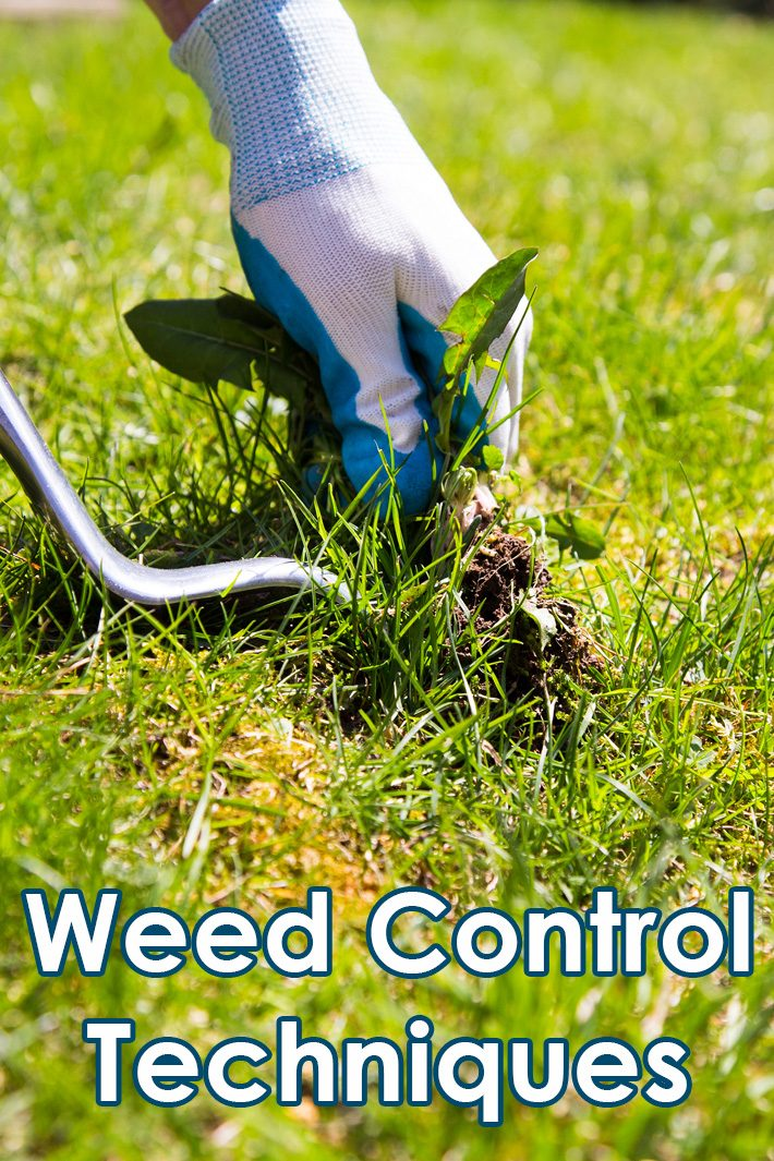 Gardening and Lawn Tips: Weed Control Techniques