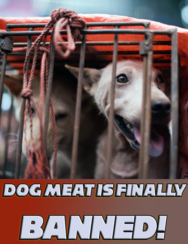 Dog Meat Is Finally Banned From Yulin Festival In China