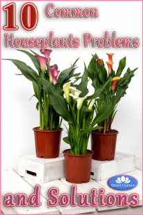 10 Common Houseplants Problems (and Solutions)