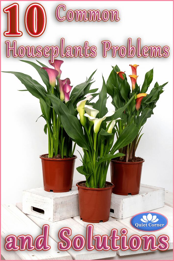10 Common Houseplants Problems (and Solutions) - Quiet Corner