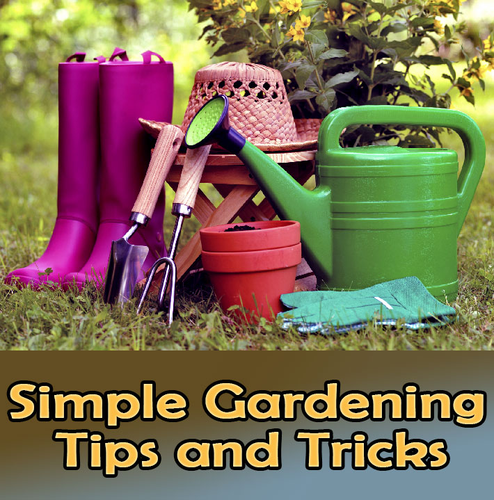 Quiet Corner Container Gardening Ideas: Quiet Corner:Simple Gardening Tips And Tricks