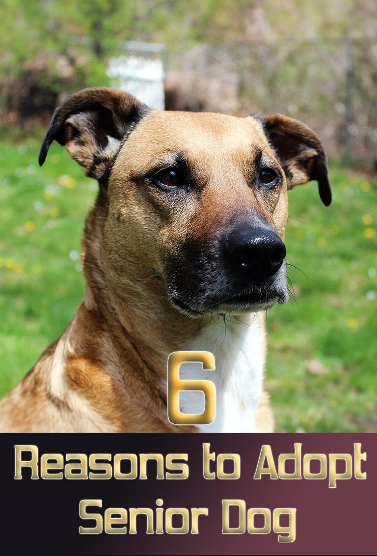 6 Reasons to Adopt a Senior Dog