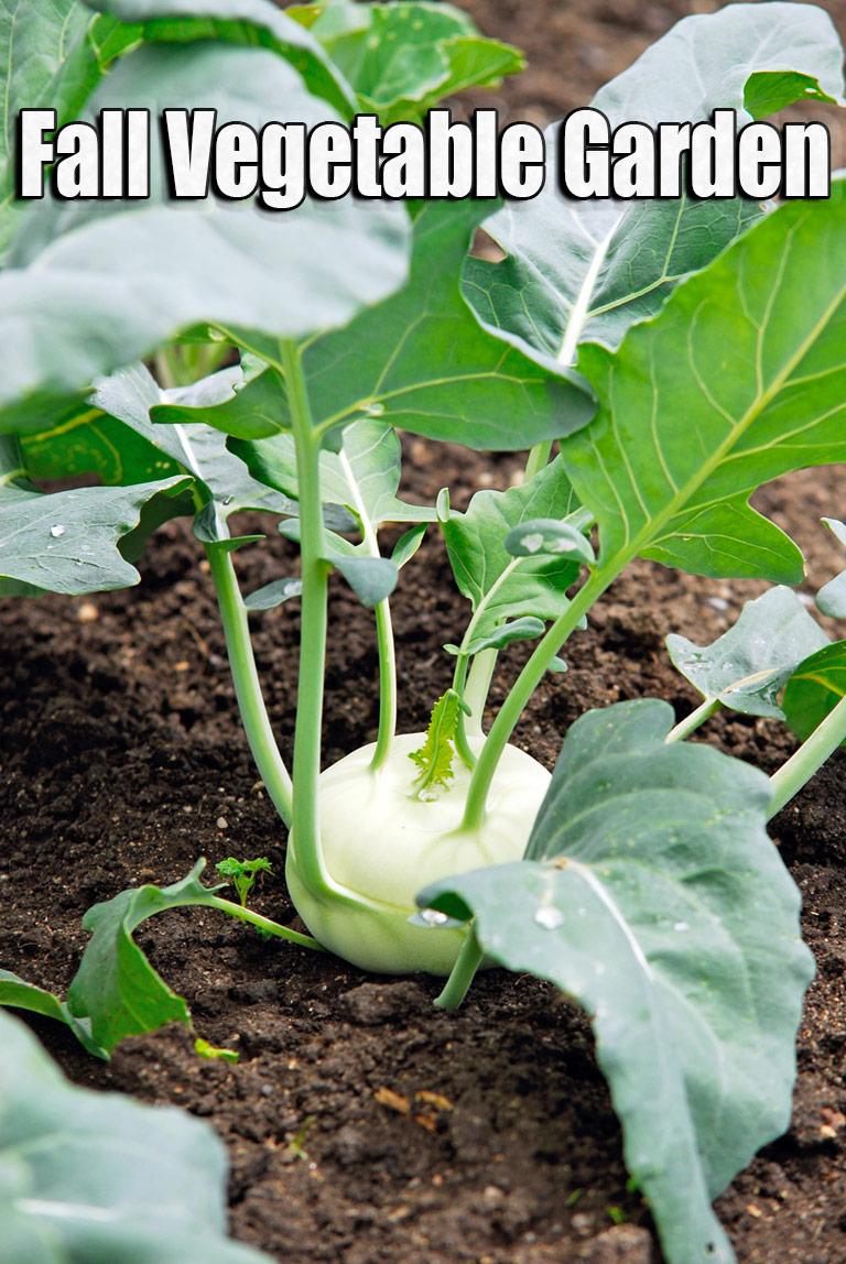Fall Vegetable Garden: 15 Best Vegetables to Grow