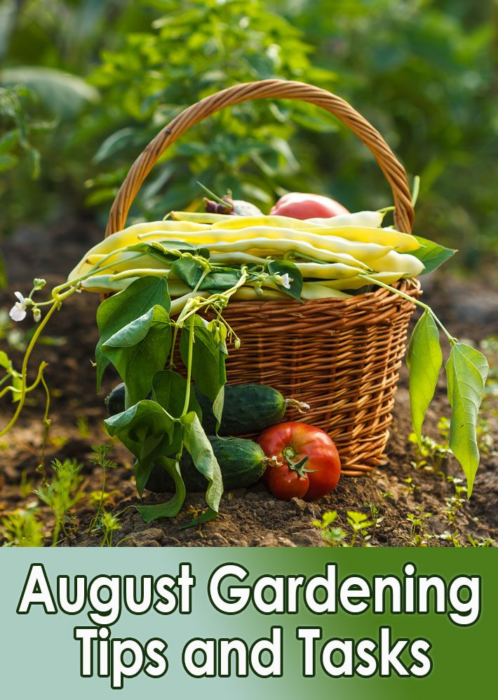 Garden Almanac – August Gardening Tips and Tasks