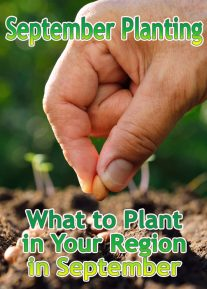 September Planting: What to Plant in Your Region