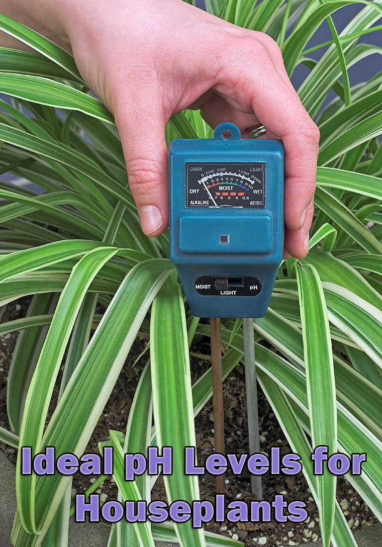 Ideal pH Levels for Houseplants