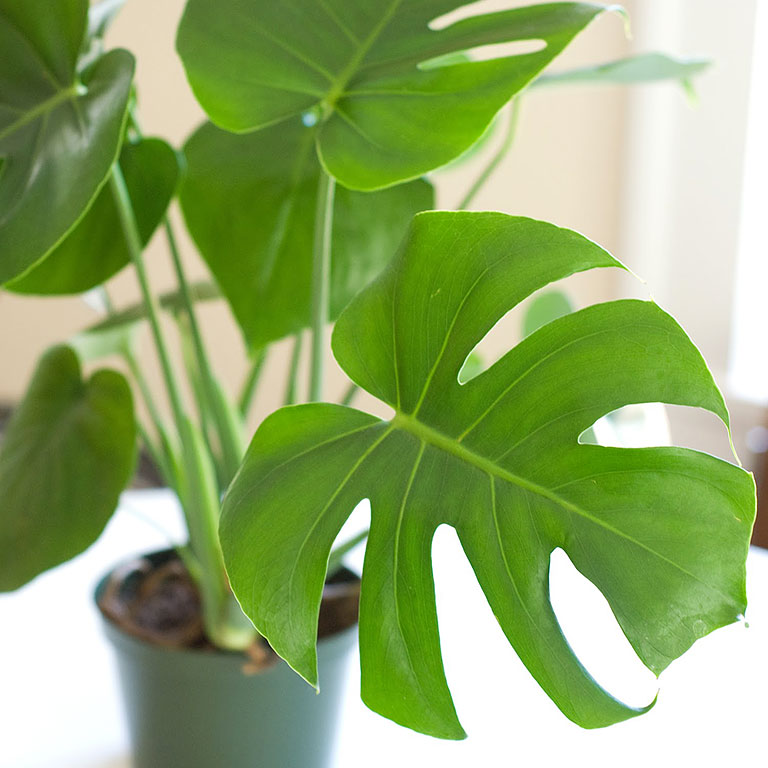 10 Low Maintenance Houseplants for Black-Thumb Gardeners