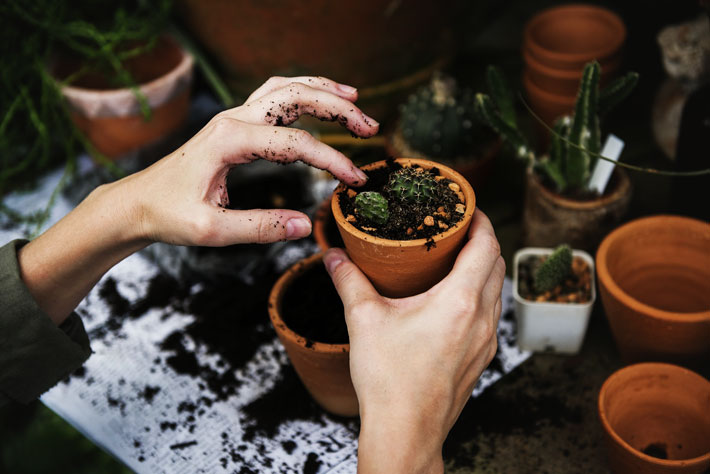 11 Mistakes that Kill Your Houseplants