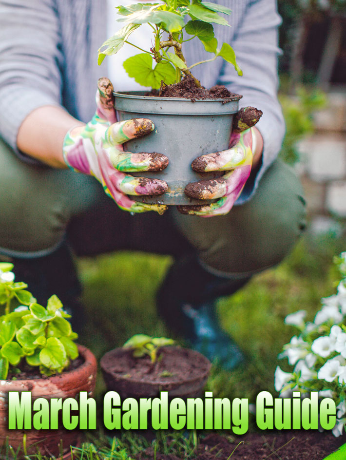 March Gardening Guide: March Garden Tasks in Your Region